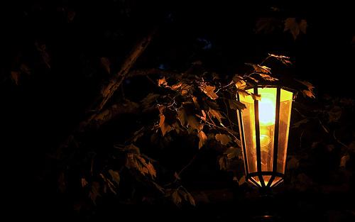 'Light Up, Light Up'
