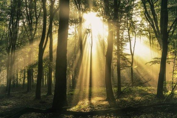 'A Shaft of Sunlight'